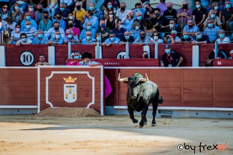 Galería fotográfica Feria Taurina de Albacete 2021. 8 de Septiembre. Fotografía de J.M Fresneda
